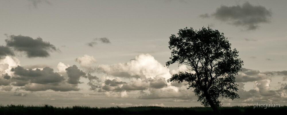 Lonely tree by phogulum