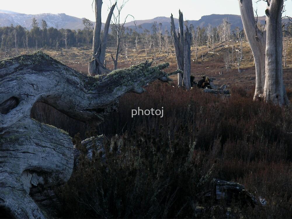 Photoj 'Pointed Tree Root' by photoj