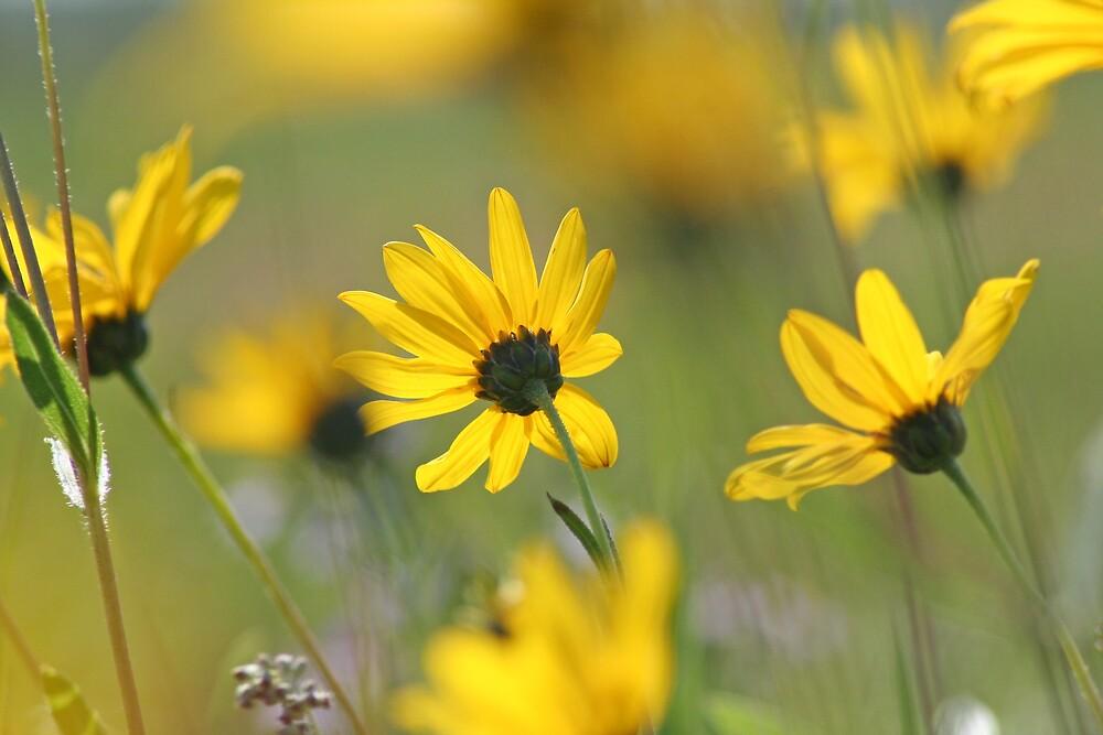 Wayside Flowers by Marilylle  Soveran