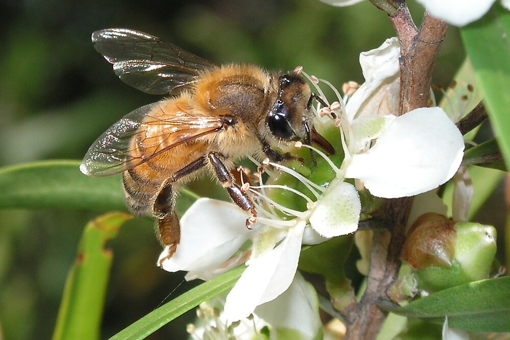 Bee by Trevor Farrell