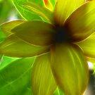 Posh Petals by Danielle Loscig