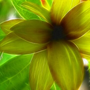 Posh Petals by danigirl87