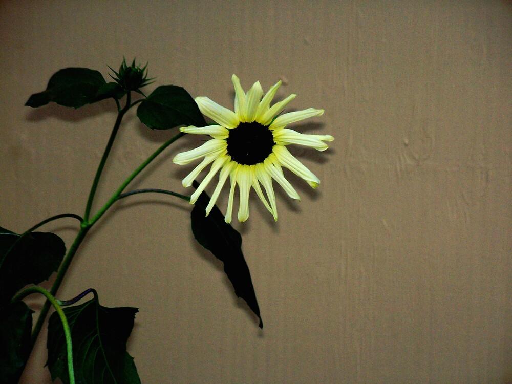 Wallflower by Judi Taylor