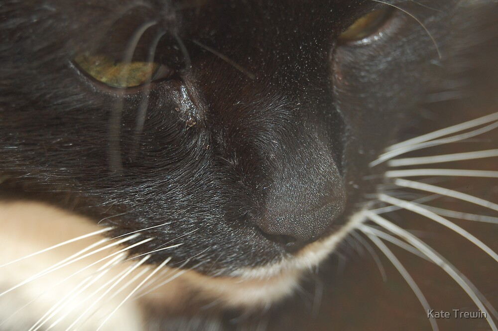Whiskers 1 by Kate Trewin
