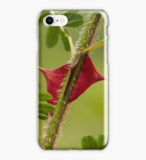 Spines of the chinese rose Rosa omeiensis. iPhone Case/Skin