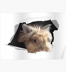 Furry Cute Bunny Columbo  Poster