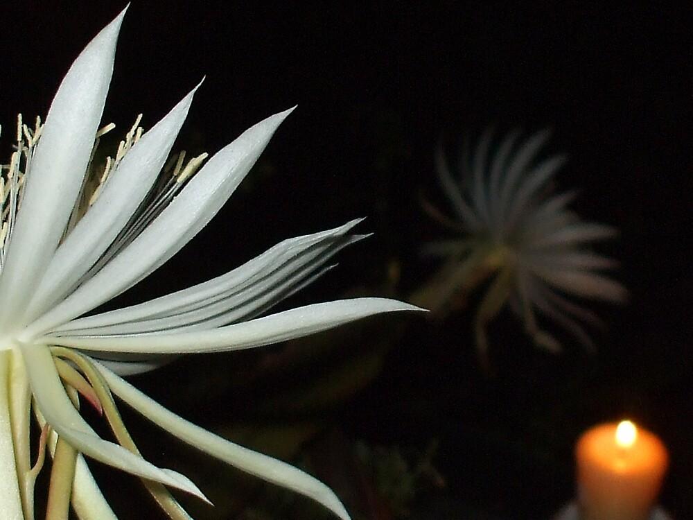 STARLIGHT~ and STAR-BRIGHT by Dalzenia Sams