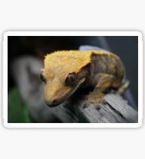 crested gecko Sticker