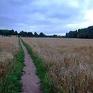Fields of Gold  by Gemma27