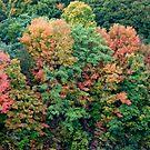 Autumn on the Hudson by Trish Meyer