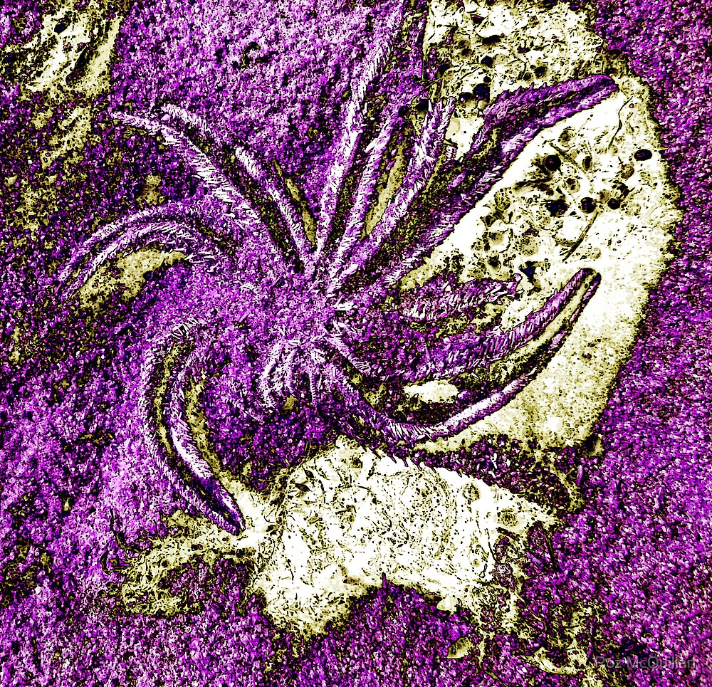 Anemone on a rock abstraction by Roz McQuillan
