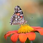 Painted Lady 2017-3 by Thomas Young