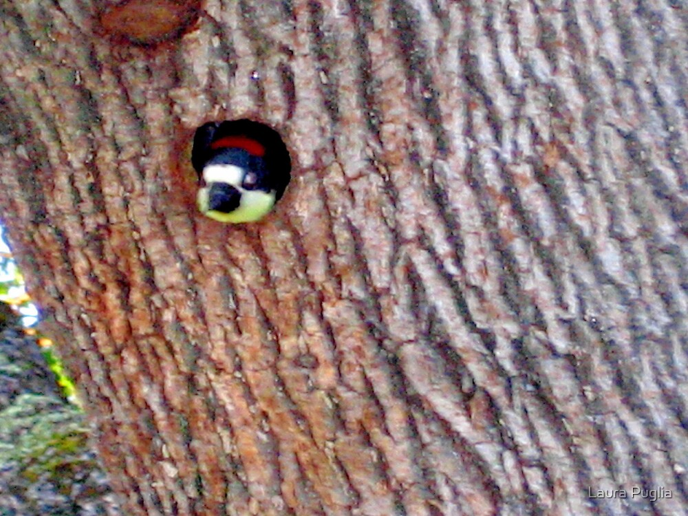 Woodpecker in our tree. by Laura Puglia
