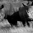 Rhino pals by Wild at Heart Namibia