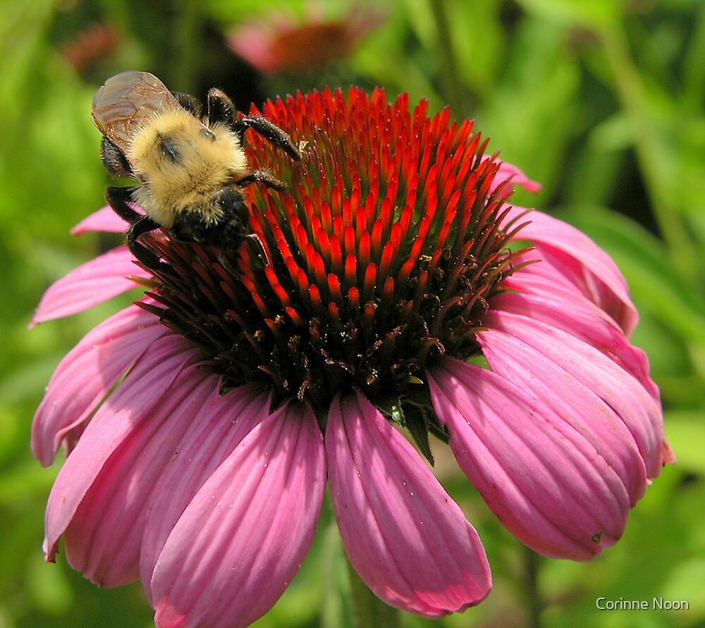 Big Bee N Cone Flower by Corinne Noon