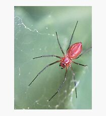 Red Spider in Web Photographic Print