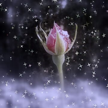 starry sparkling rosebud in the snow 3, tinted by DlmtleArt
