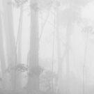 Misty Gums by Geoff Smith