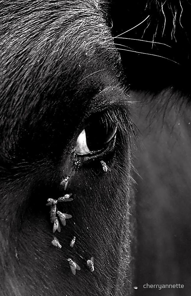 Cow's eye by cherryannette