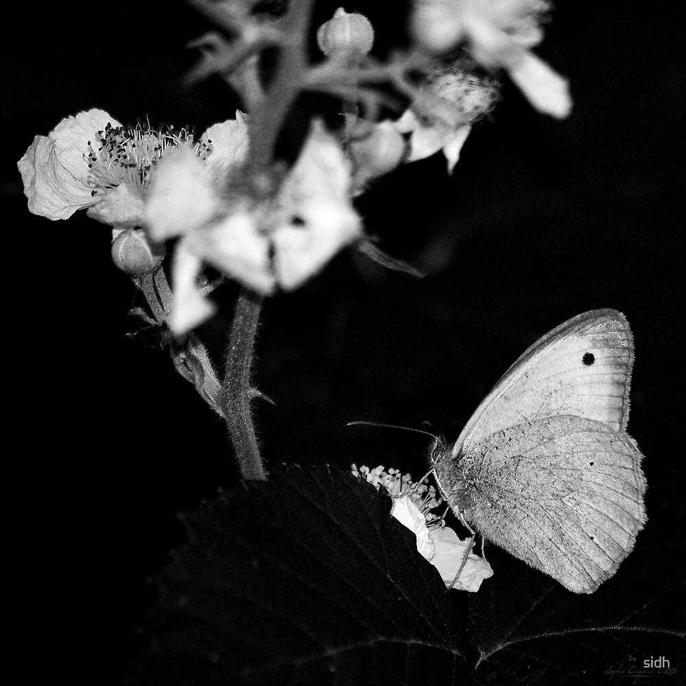 - Capture - by Sophie Cagnac