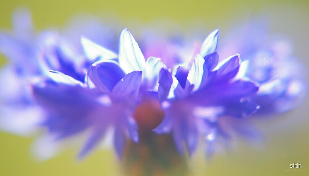 - Purple Crown - by Sophie Cagnac
