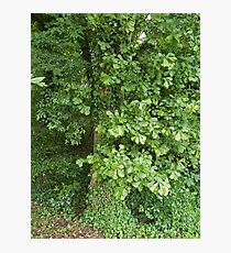 Ivy Covered Tree Photographic Print