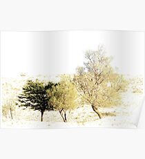 Trees growing in the Negev Desert. High key  Poster
