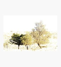 Trees growing in the Negev Desert. High key  Photographic Print