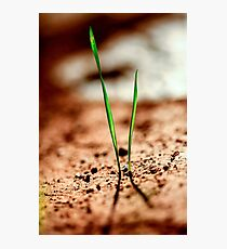Grass blades grow out of the ground in a harsh environment  Photographic Print