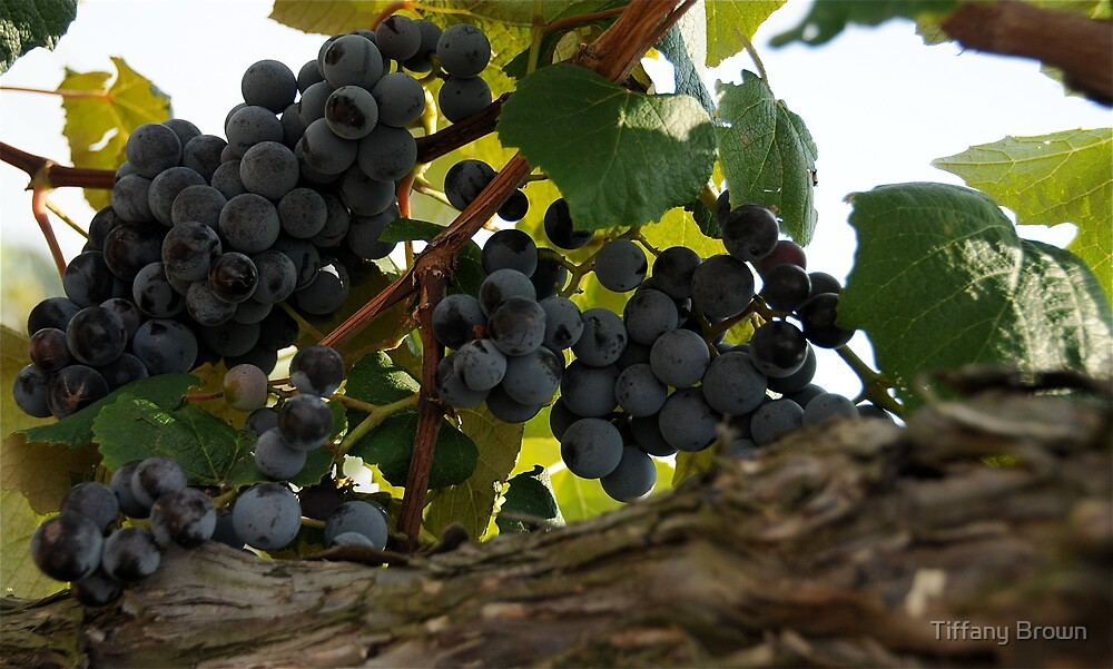 Grapes by Tiffany Brown