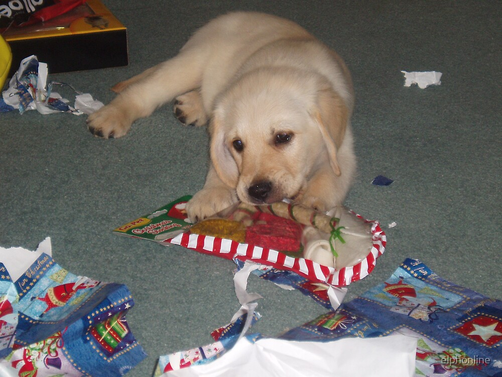 Christmas chews by elphonline