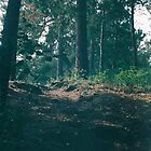 «Camino a través del bosque» de Marina Demidova