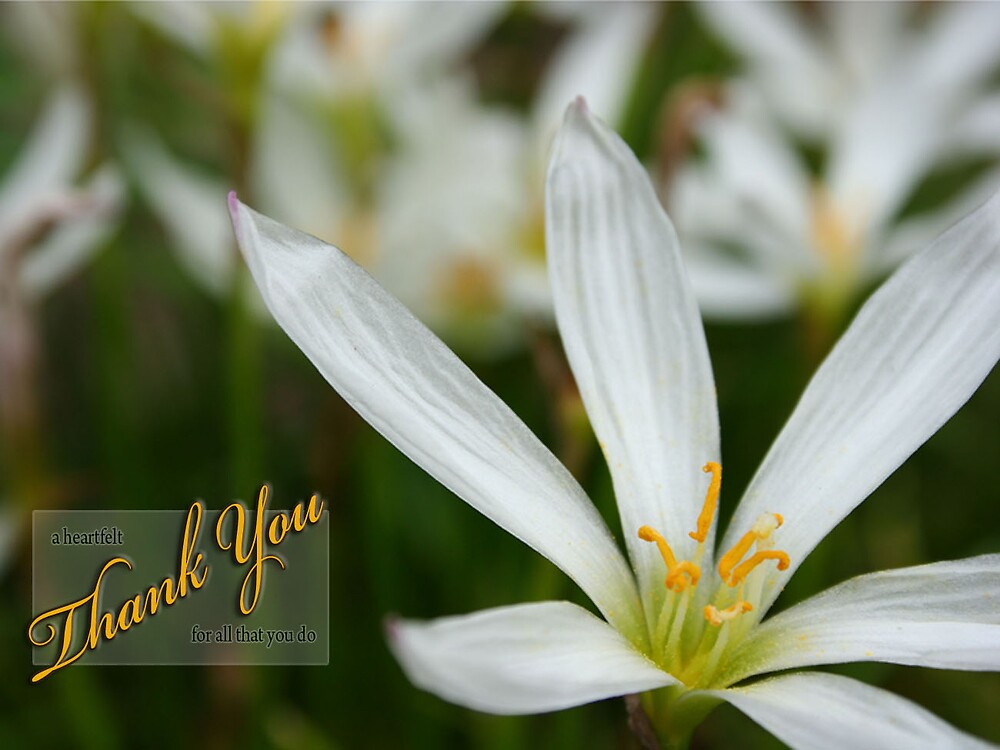 A Heartfelt Thank You For All That You Do by DuchessCards
