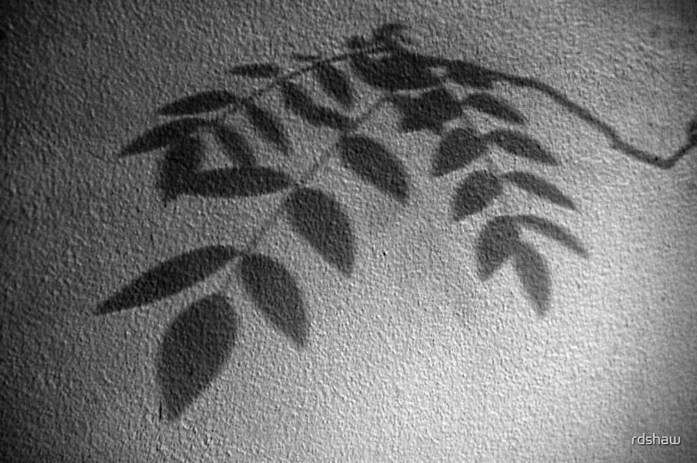 Indigo Shadow by rdshaw
