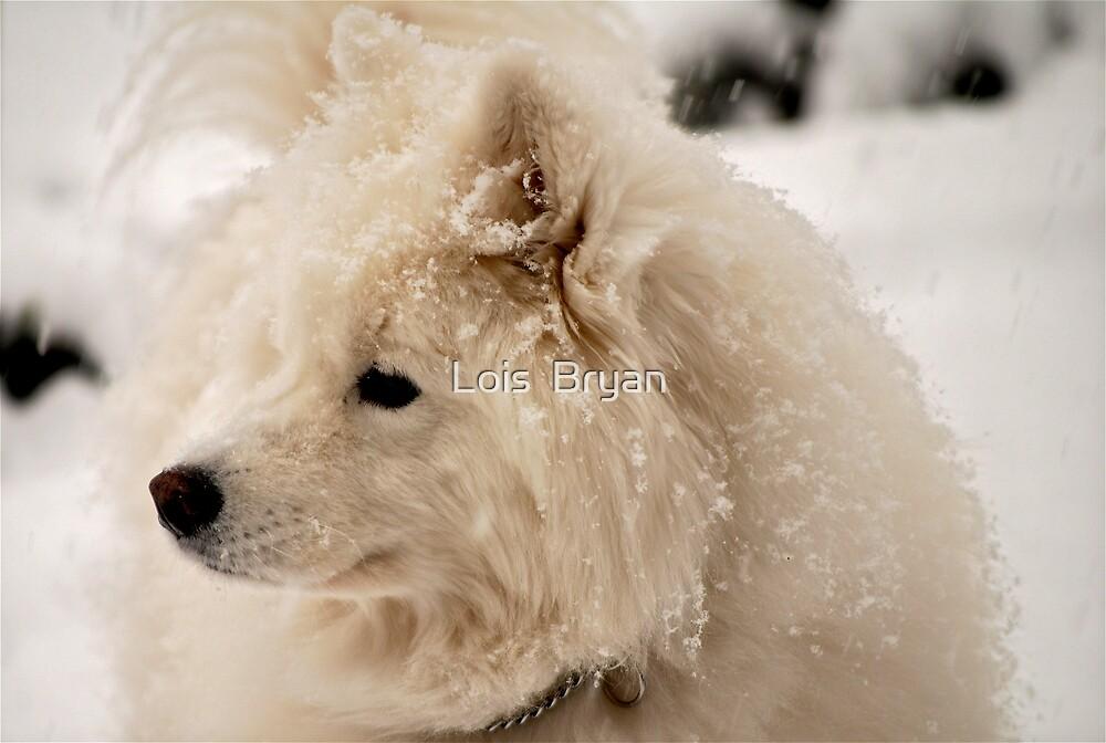 White on White by Lois  Bryan