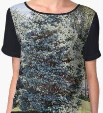Blue Fir trees in the background of birches in the sunlight Women's Chiffon Top