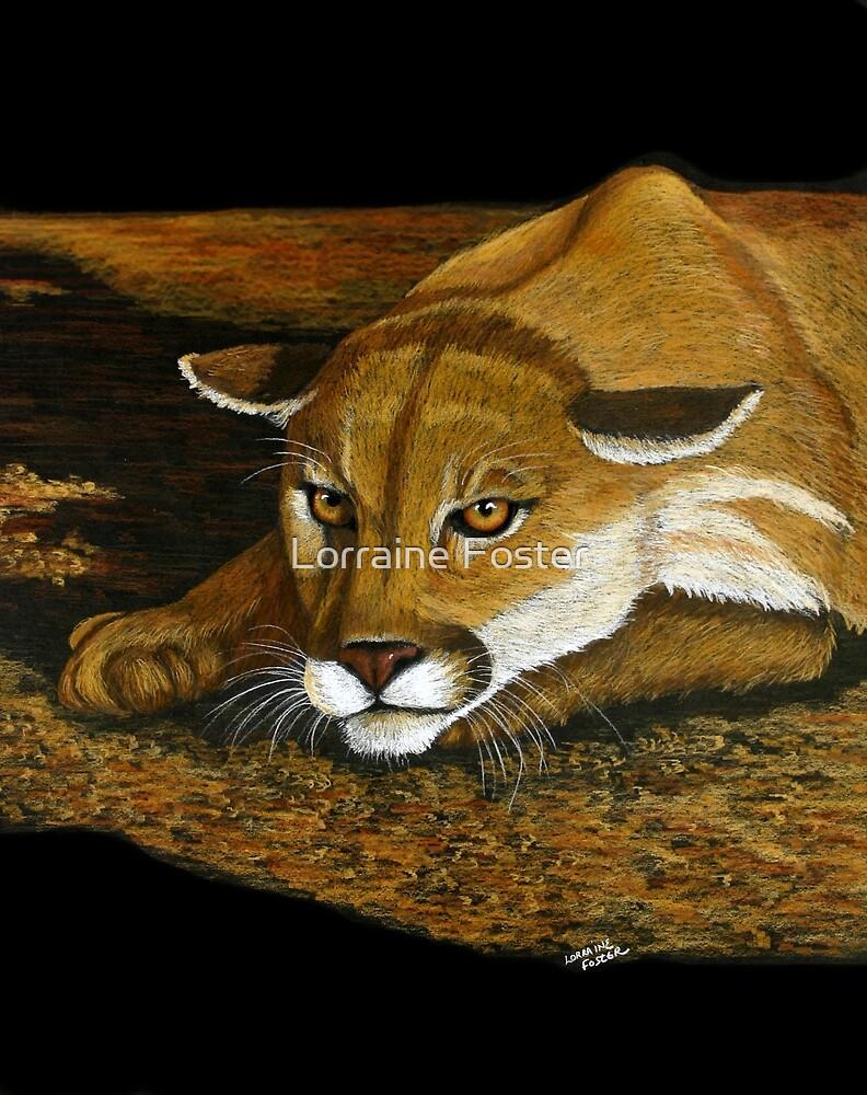 Cougar in the Dark by Lorraine Foster