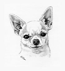 Proud champion smoothcoat chihuahua! Photographic Print