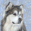 Alaskan Malamute Dog in Snow by bydonna