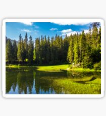 lake among the conifer forest Sticker