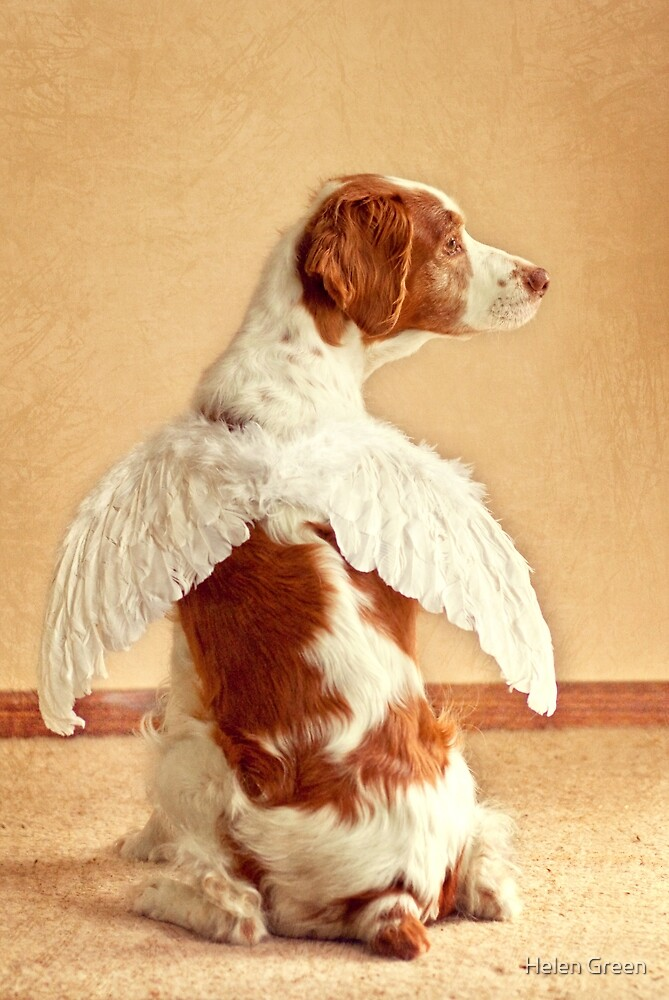 Christmas Angel by Dog Shop
