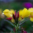 Yellow flowers by Yana Art