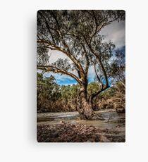 Magestic River Gum Tree Canvas Print