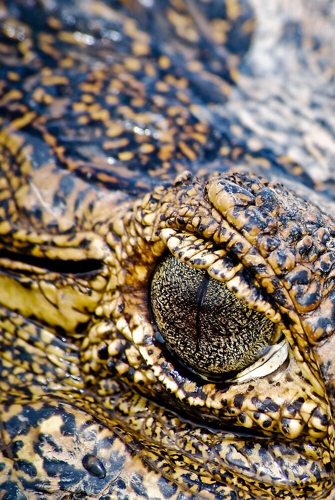 Crocodile eye by chazthomson