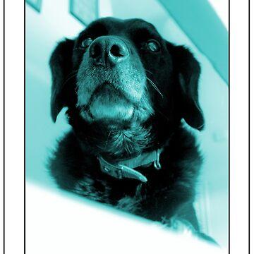 DOG! by GeorgeSears