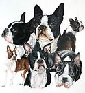 Boston Terrier by BarbBarcikKeith