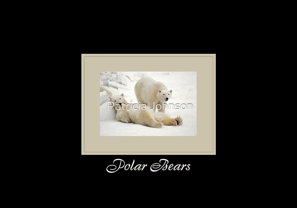 Polar Bears by Patricia Johnson