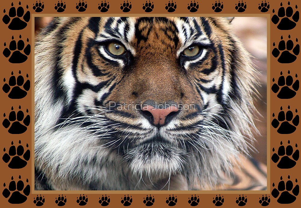 Tiger Greeting Card by Patricia Johnson