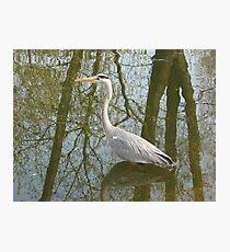 Waterbird in Austria Photographic Print