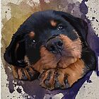 Cute Rottweiler Puppy by thedailysoe